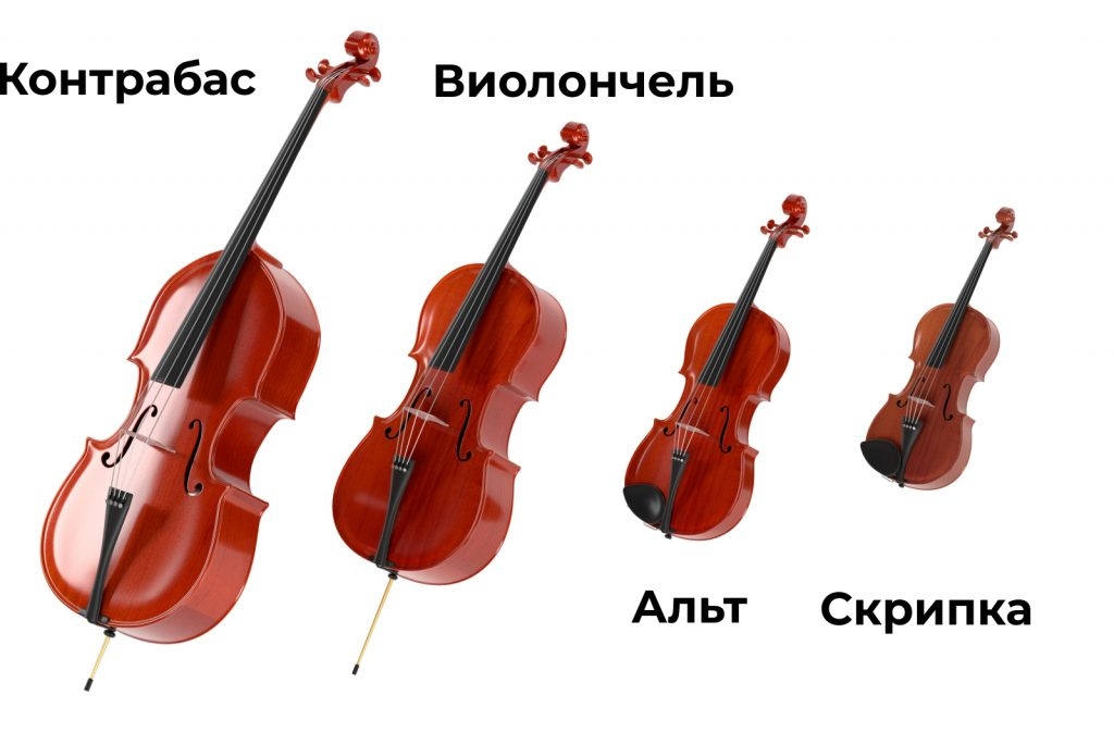Отличие скрипки альта виолончели и контрабаса